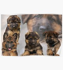 Indiana German Shepherd Posters Redbubble