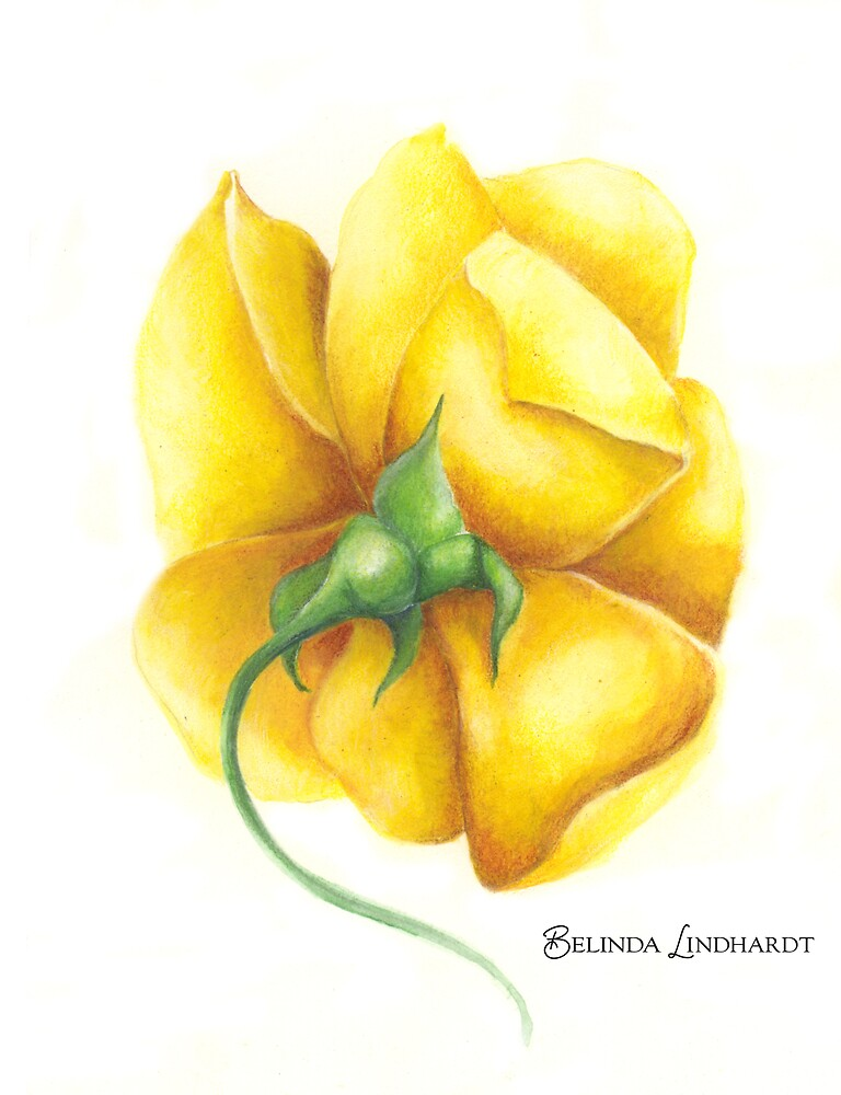 Yellow Rose by Belinda Lindhardt