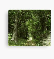 Scary Trail  Canvas Print