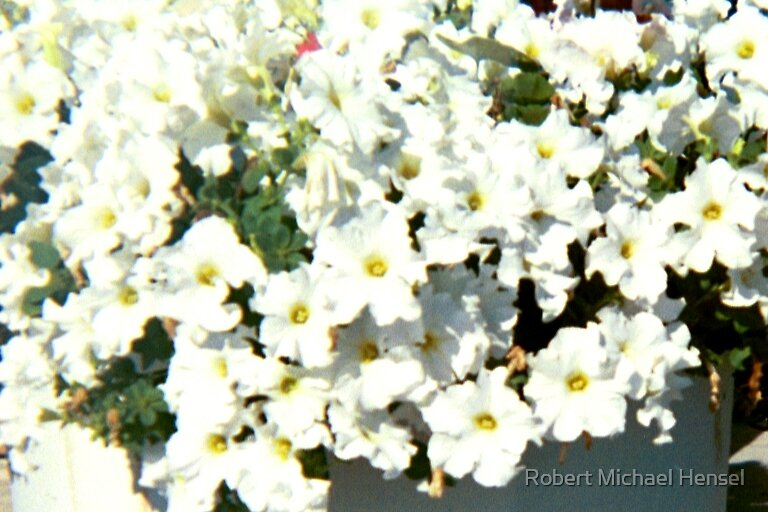 White Flowers by Robert Michael Hensel