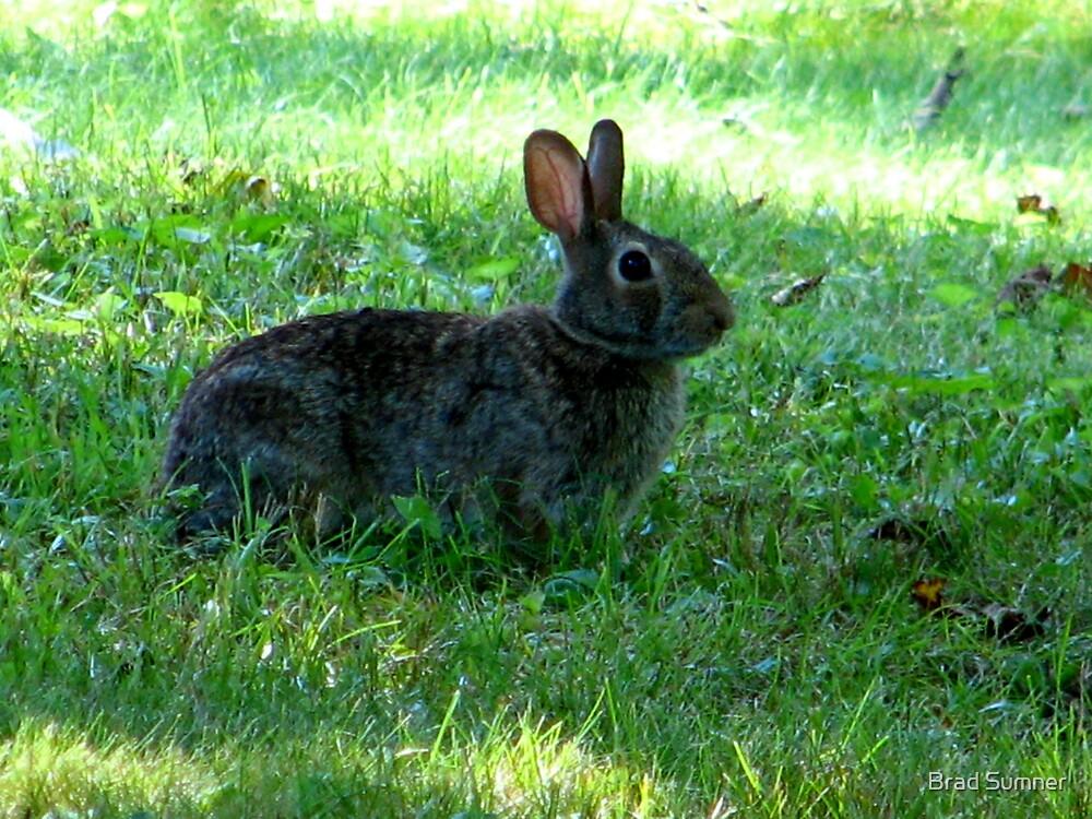 Rabbit by Brad Sumner