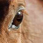 The Eye of the Horse is the Mirror of the Soul by Bine