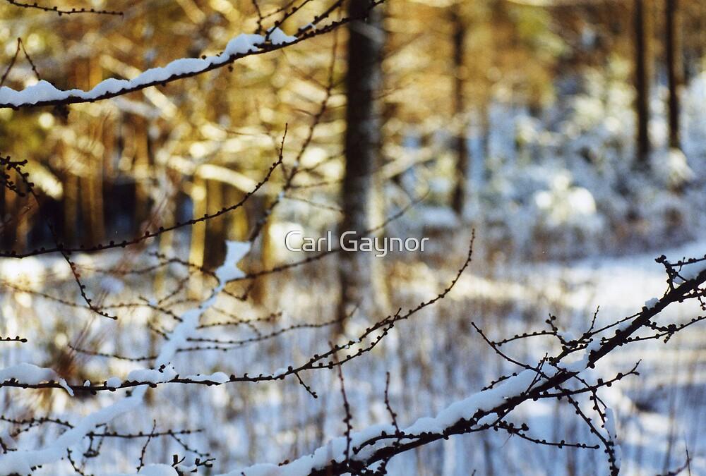Winter - Tree One  by Carl Gaynor