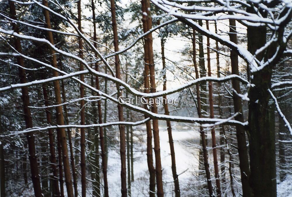 Winter - Tree Three  by Carl Gaynor