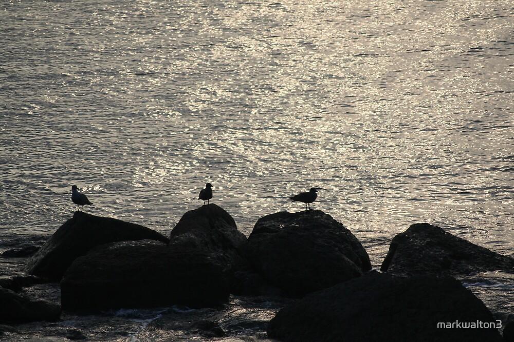 bird silhouette by markwalton3