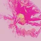 Dusky Pink Poppy on Pink Sky by Justine Butler - daisybluesky.co.uk Tel: 07969 444962