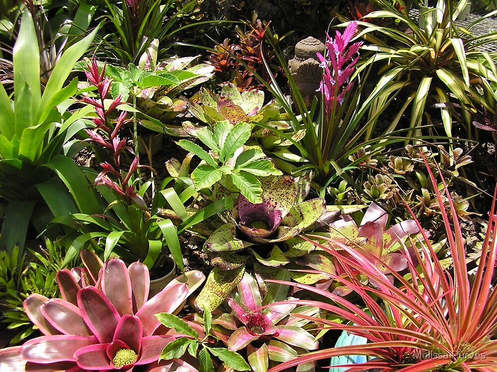 Queensland Colour by Melissa Purves