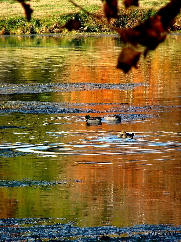 Ducks on Pond by Brad Sumner