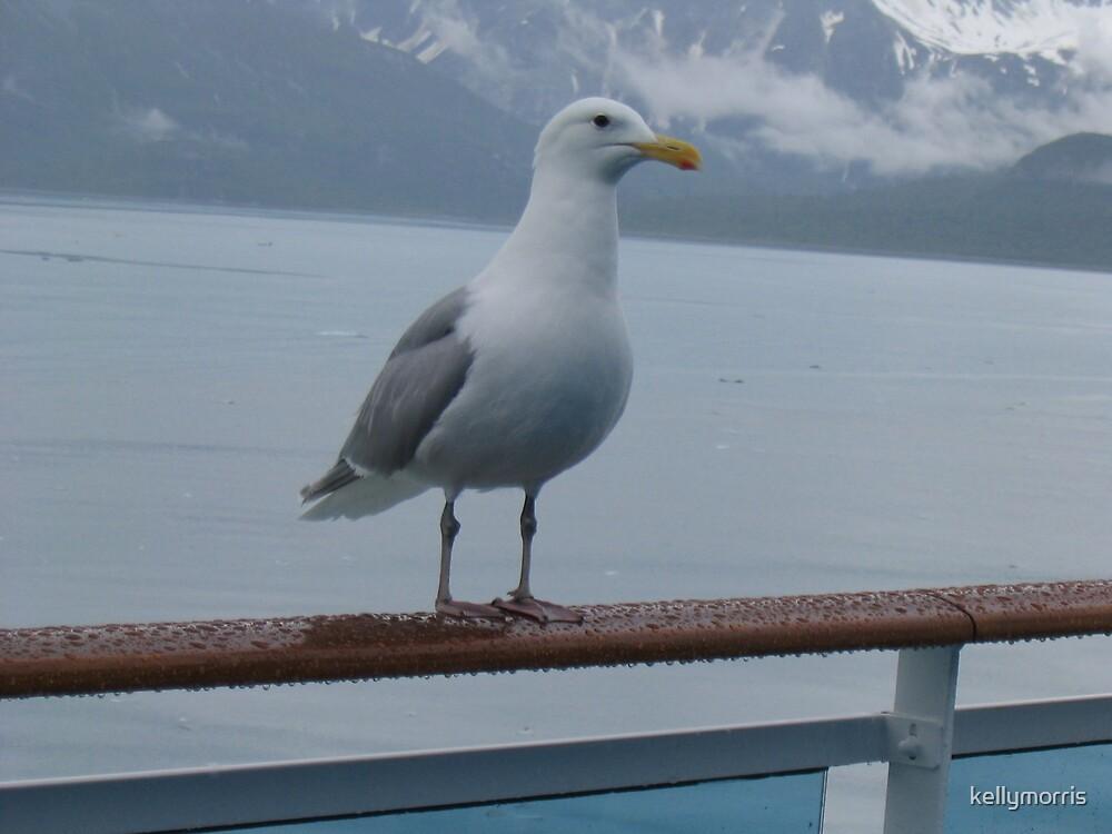 The Alaskan Gull by kellymorris
