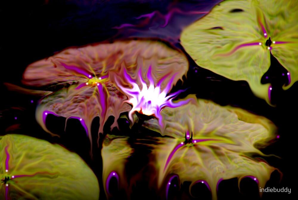 Magic Garden by indiebuddy
