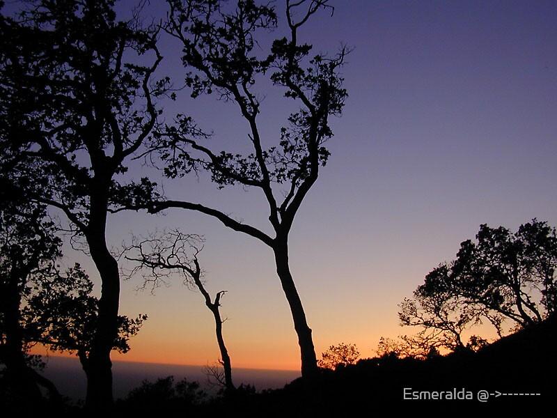 sky by Esmeralda @->-------