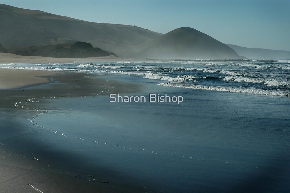 cool blue morning by Sharon Bishop