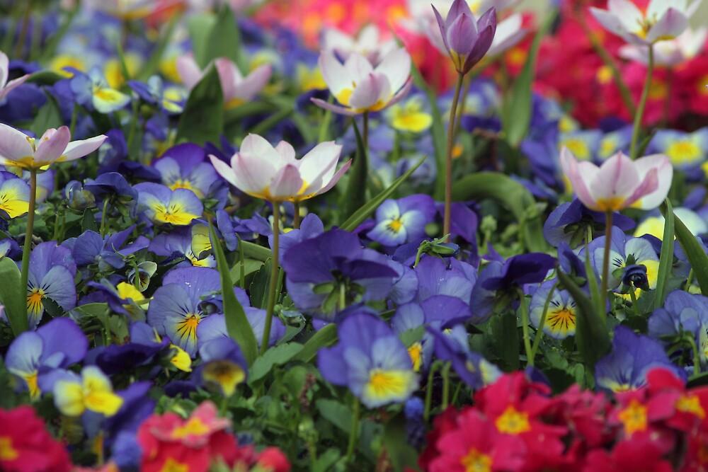 Flowers by emmajc