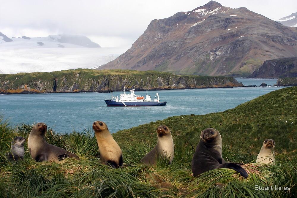 Seal family by Stuart Innes