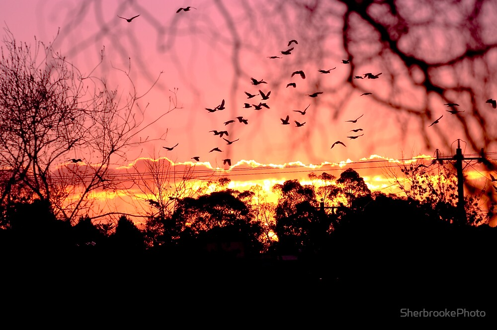 Evening Flight by SherbrookePhoto