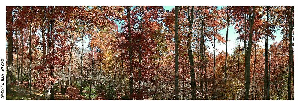 """""""Woods Panorama"""" by Skip Runge"""