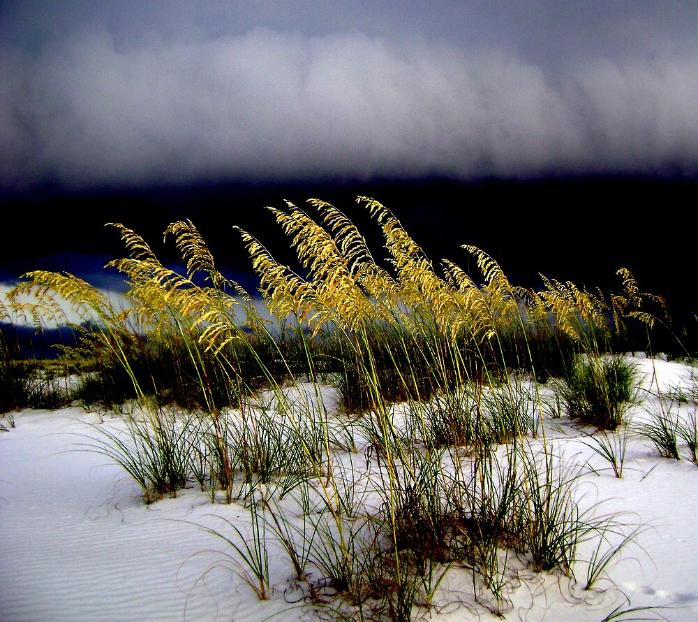 Storm La Beach by Josh B