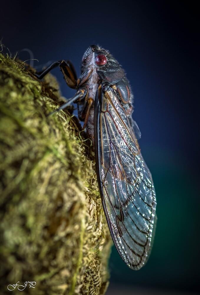 cicada by FJPhotography