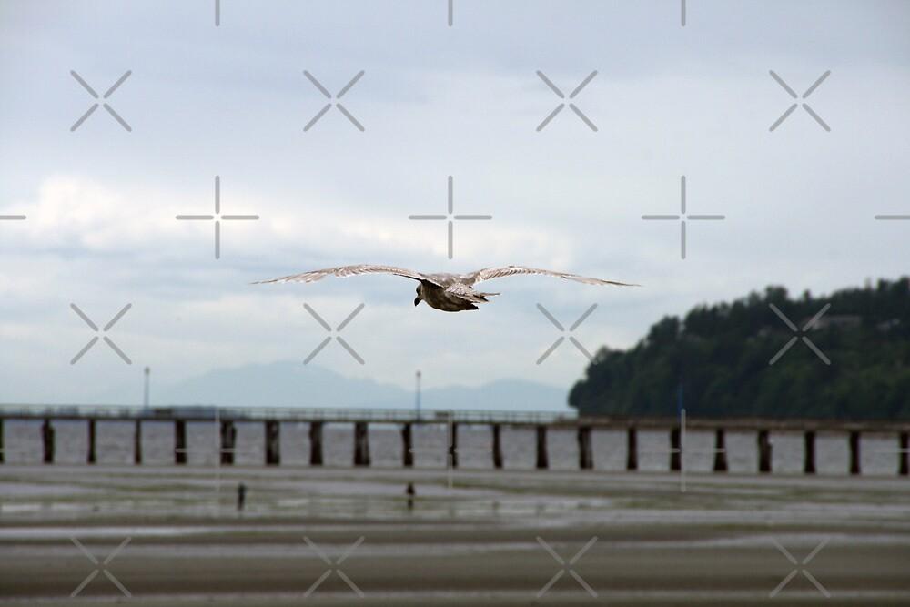 Beach Bird by Angela E.L. Clements