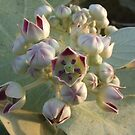 Flower 31_Original by D. Shihab