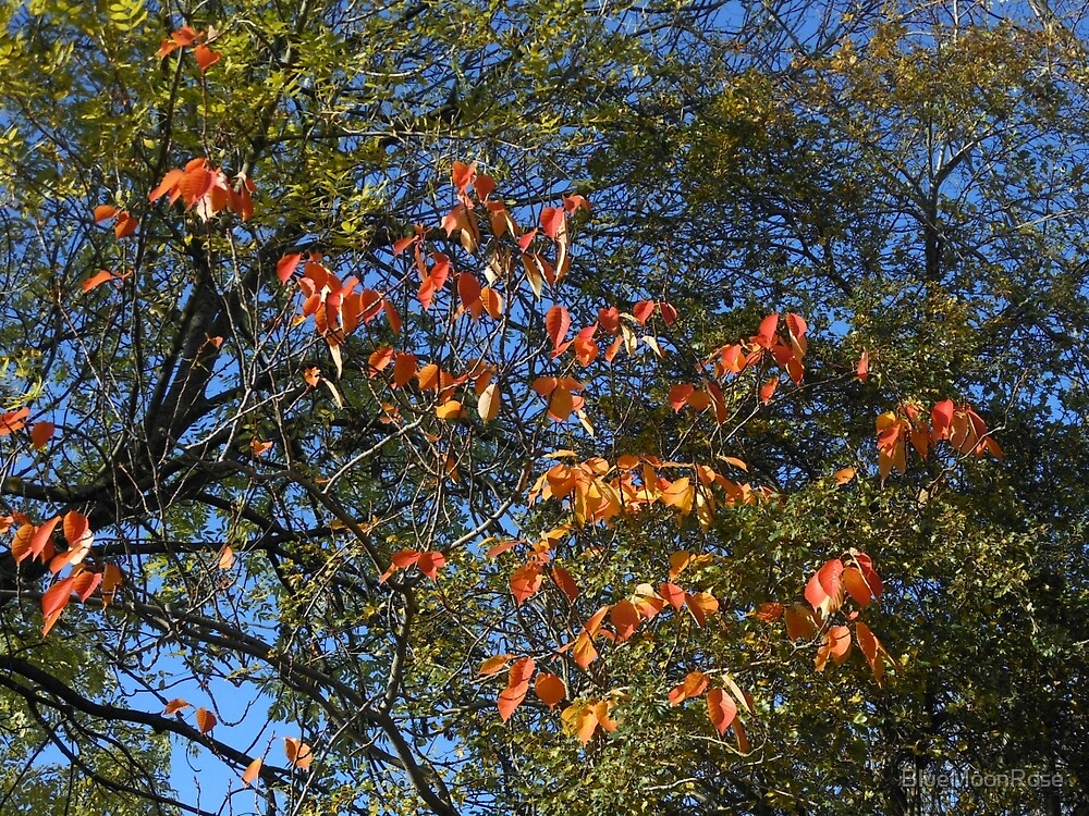 Sunlit Autumn Leaves von BlueMoonRose