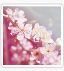 *Pinklight - Plum Blossoms Sticker