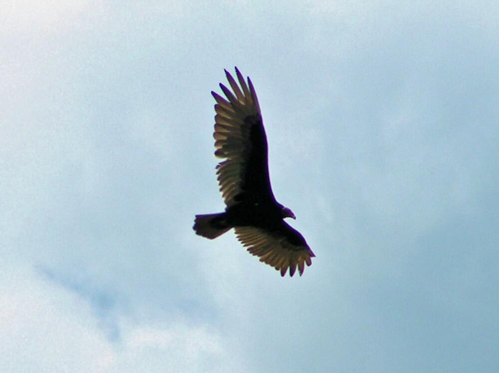 In Flight by kraftyest