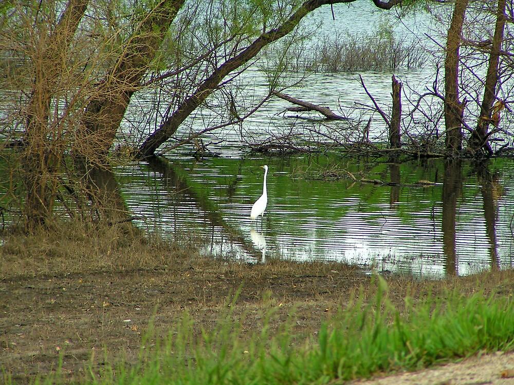 White Crane by kraftyest