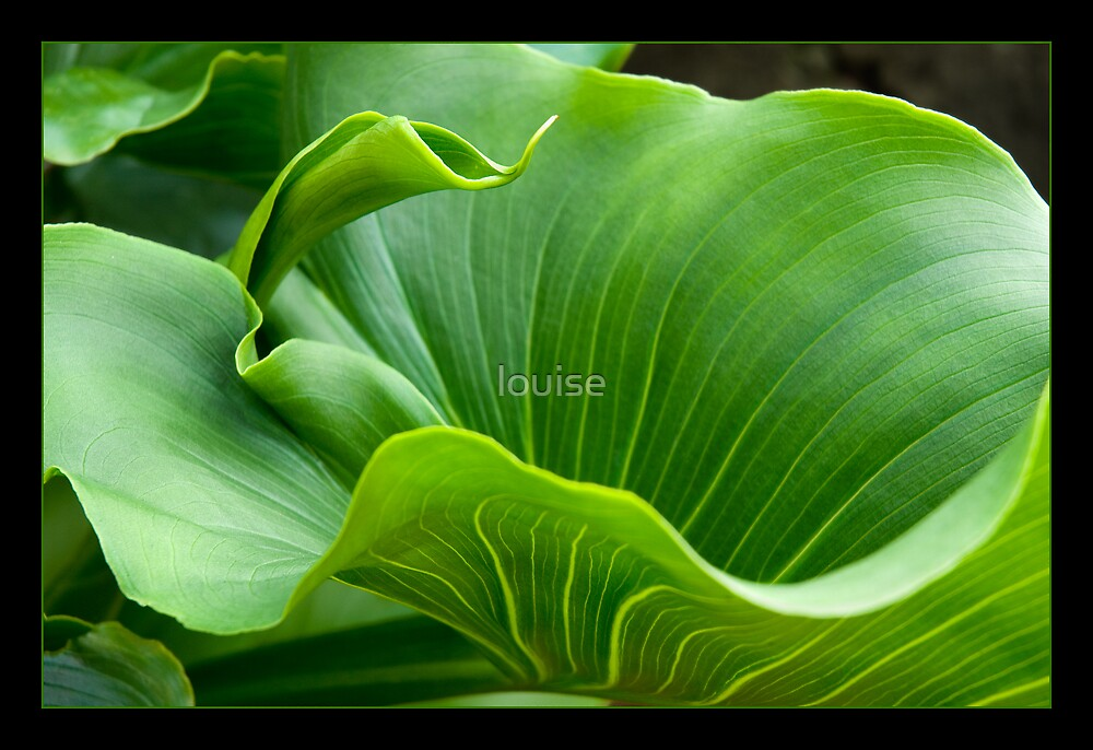 LUSCIOUS LEAVES by louise