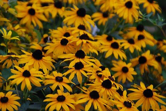 Yellow Flowers by Vonnie Murfin