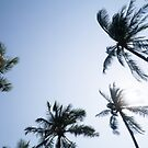 Summer Breeze & Palm Trees by wtvrcait