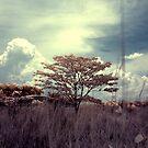 Infrared at Cyberjaya 6 by zoule