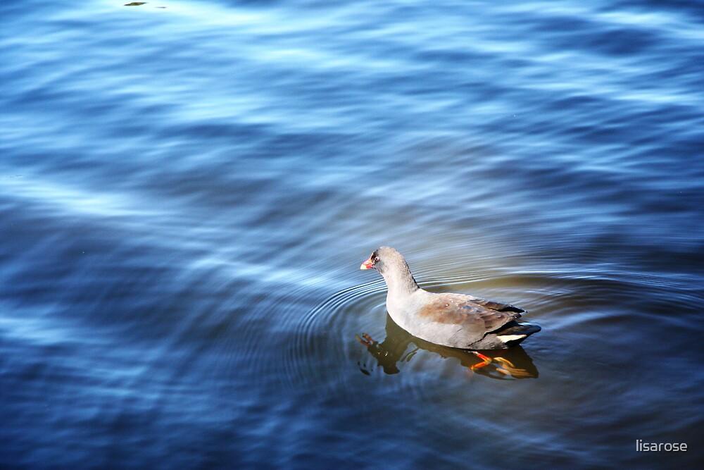 Quack! by lisarose
