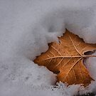 Autumn's End by Barbara  Brown