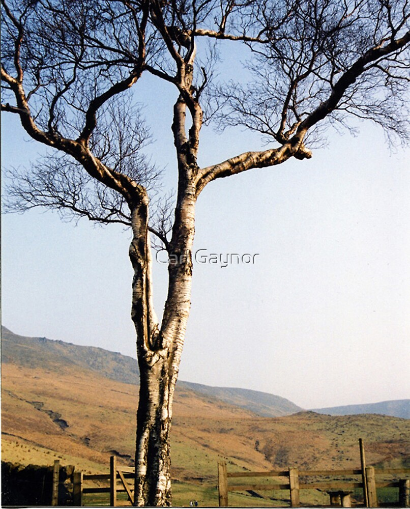 Tree in Autumn  by Carl Gaynor