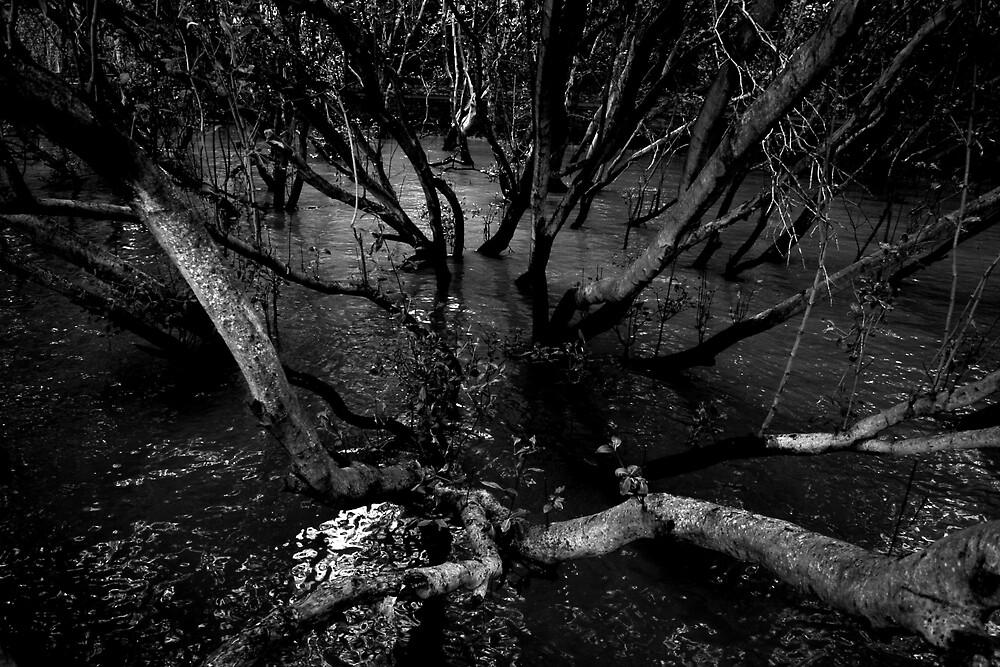 Tree skeletons on water by Andrew Edgar