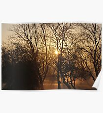 Sunrise at the Treetops Poster