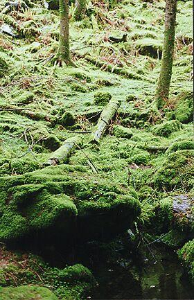 soft moss by tcuzelac