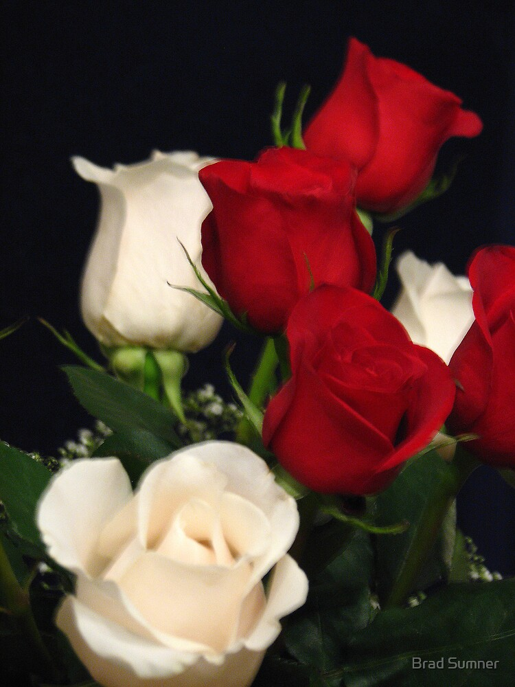 Red and White Rose Bouquet by Brad Sumner
