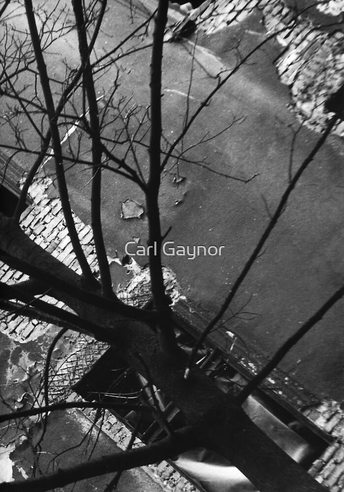 Tree in Side Street - Krakow  by Carl Gaynor