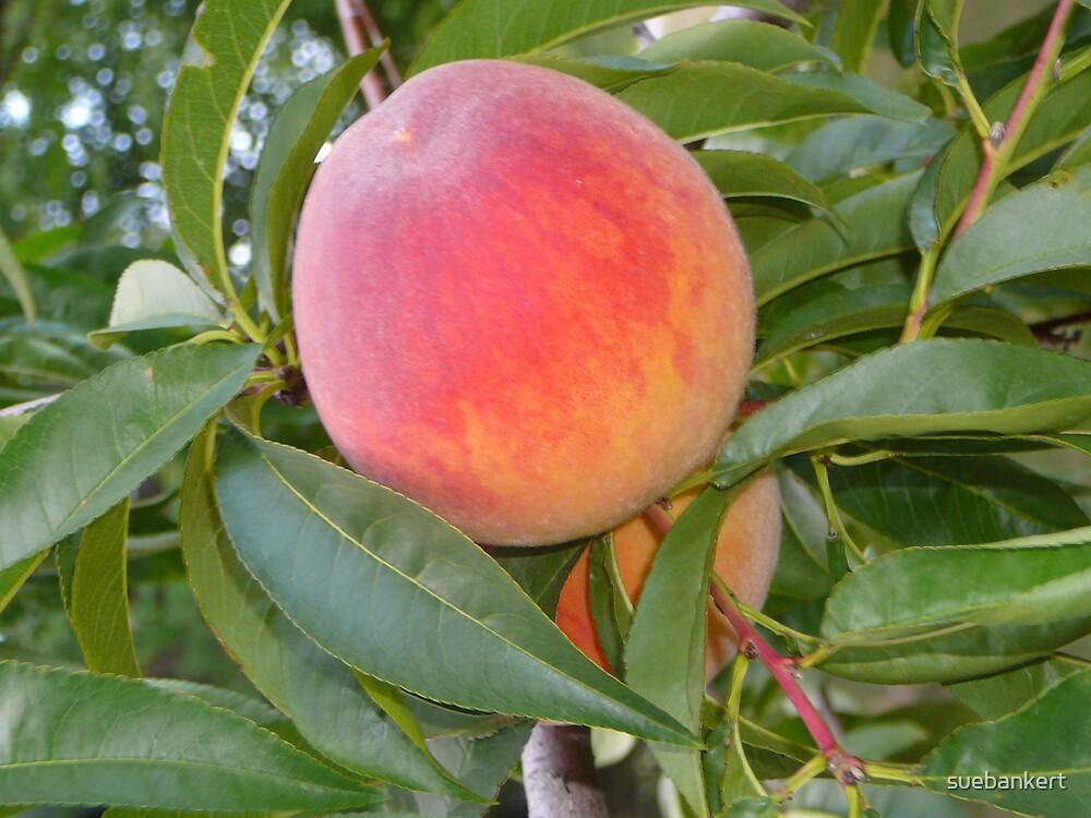 Peach by suebankert