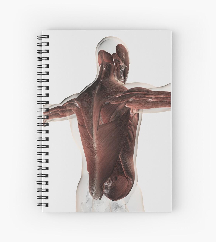 Cuadernos de espiral «Anatomía del músculo masculino de la espalda ...