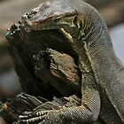Lazy lizard by AnnaKT