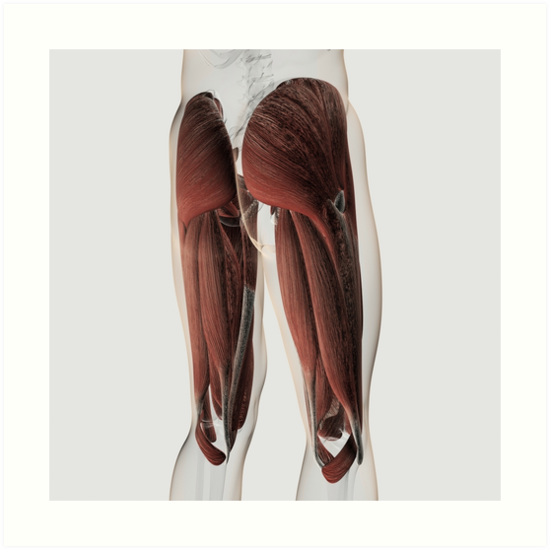 Láminas artísticas «Anatomía del músculo masculino de las piernas ...