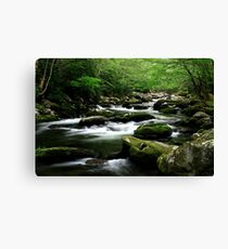 Mossy Mountain Stream Canvas Print