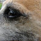 Close-up by Andy Harris