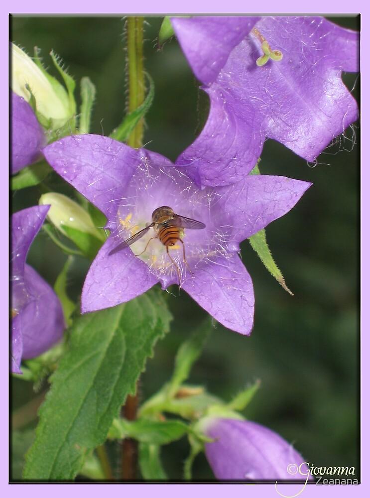 Big Flower, Little Bee...  by Zeanana