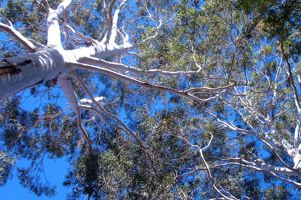 Skyward Tree by Patrick Steen