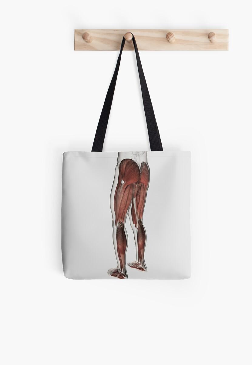 Bolsas de tela «Anatomía del músculo masculino de las piernas ...
