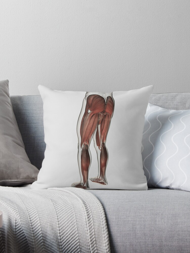 Cojines «Anatomía del músculo masculino de las piernas humanas ...